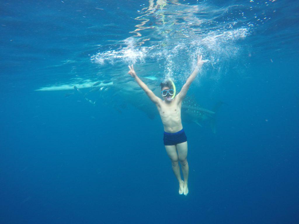 Bơi cùng cá mập voi ở Oslob Cebu | Du lịch Cebu ngắm cá mập voi