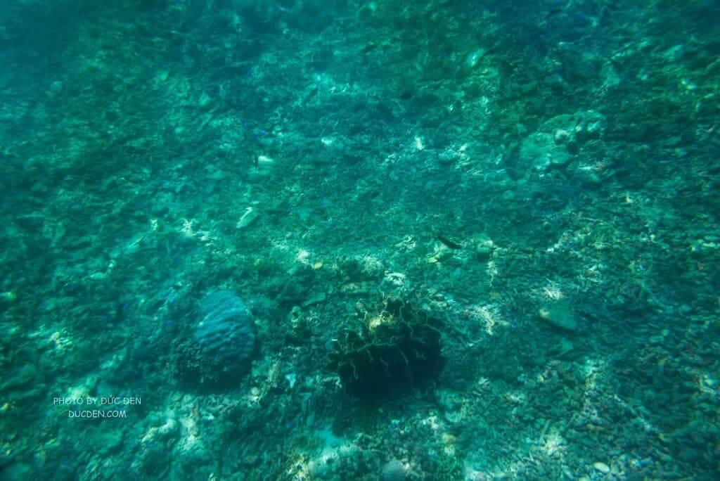 Yên tâm là cứ đi island hopping là sẽ được lặn ở đây, mỗi tội cá hơi bé - Kinh nghiệm du lịch Boracay của Đức Đen