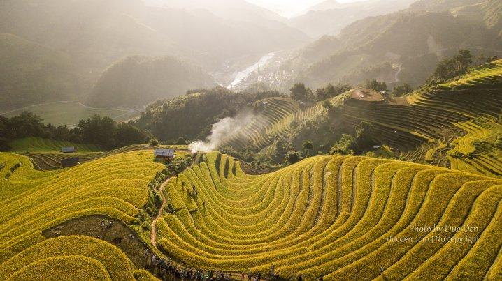 Đồi móng ngựa nhìn từ flycam - nắng chiều chiếu vào lúa xanh thành vàng óng
