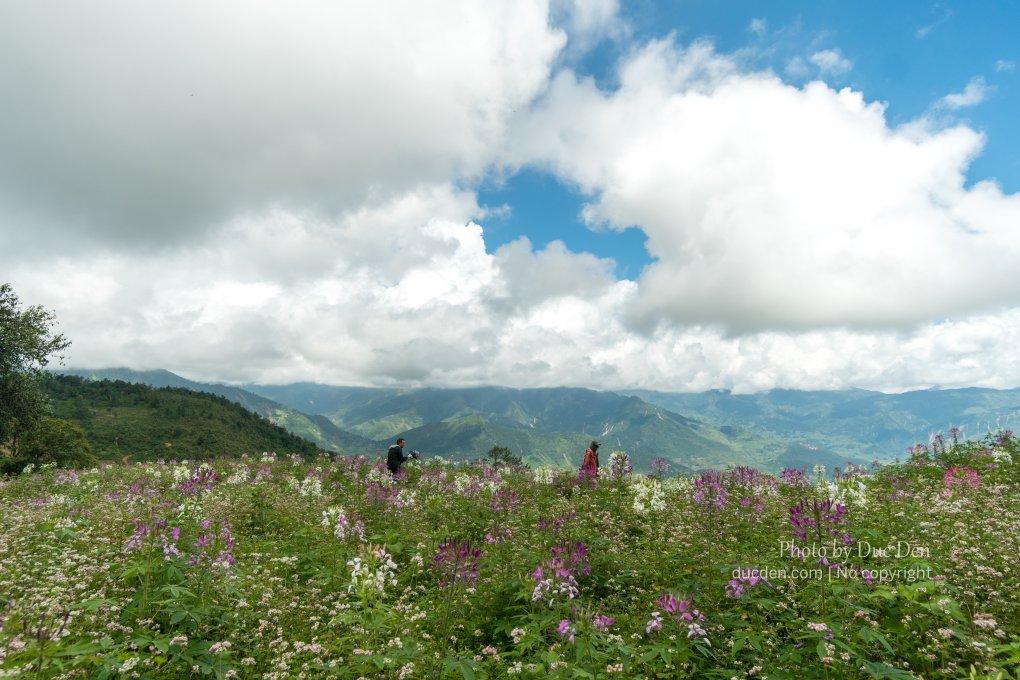 Vườn hoa bên đường đèo Khau Phạ | Phượt Mù Cang Chải