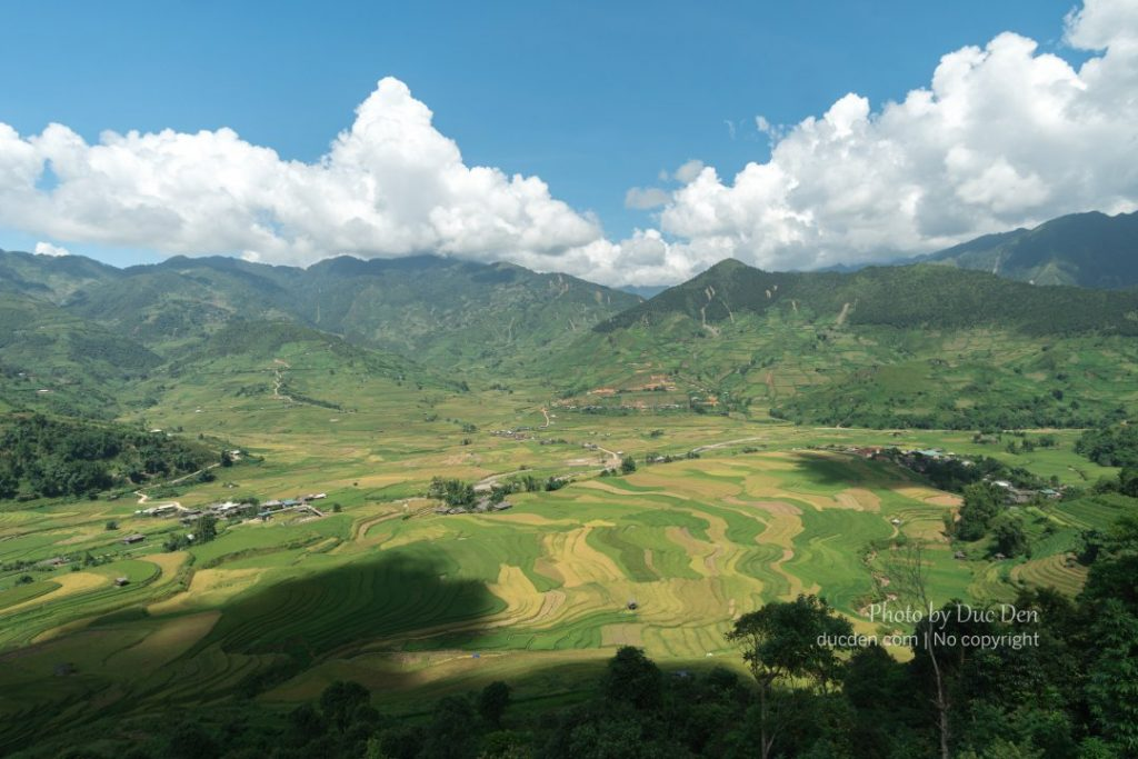 Cánh đồng lúa chín ruộng bậc thang ở thung lũng Tú Lệ