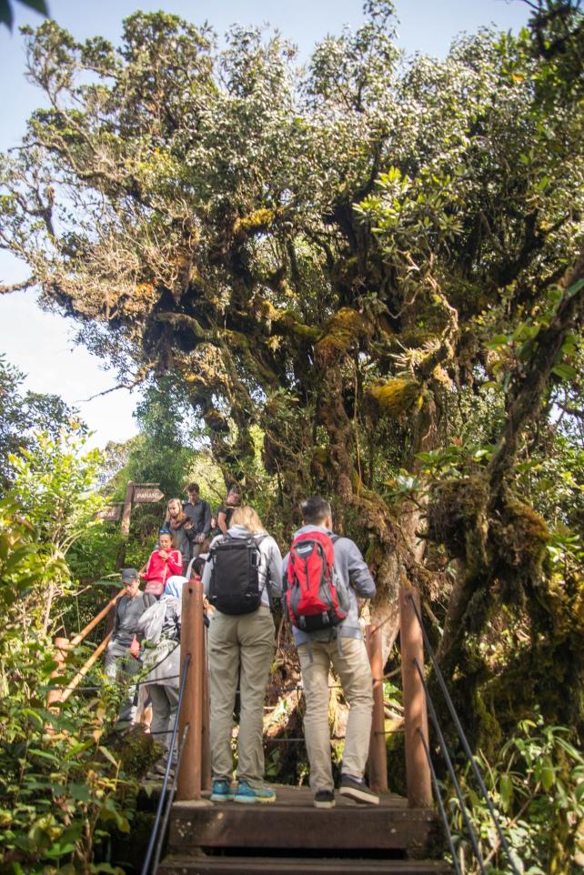 Rừng già Mossy đây | Kinh nghiệm du lịch Cameron Highlands