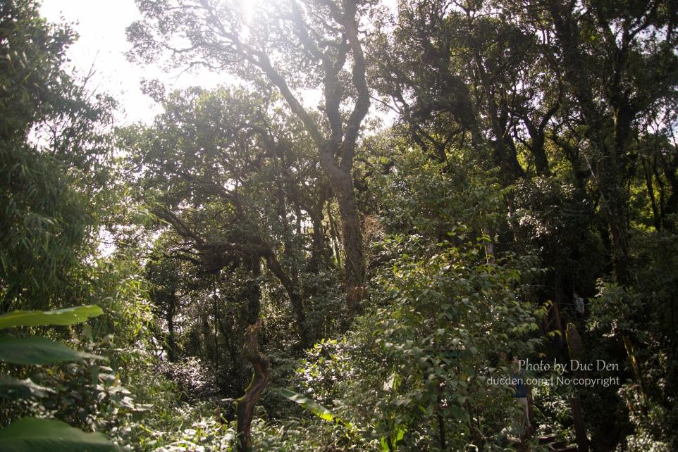 Trong rừng toàn những cây cổ không biết tên. Đi chỉ sợ có con gì nhảy xuống đầu :))