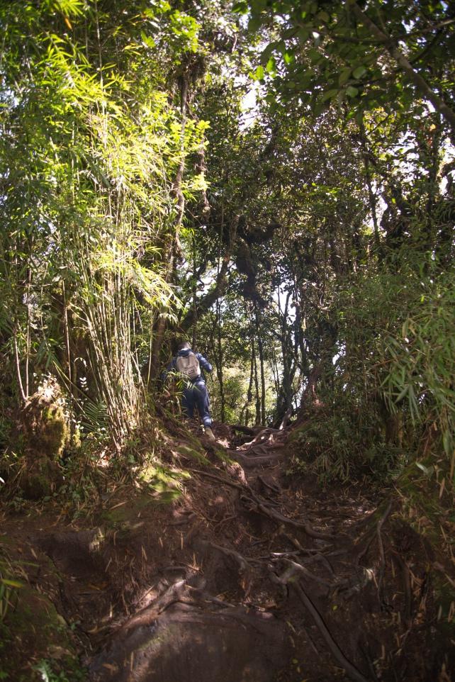 Một số đoạn đường đất khá trơn và nguy hiểm   Khám phá Cameron Highlands
