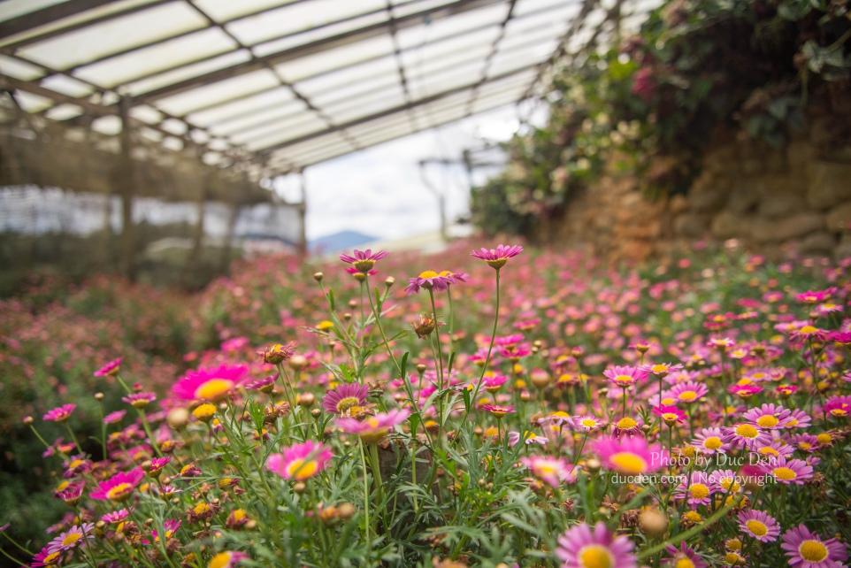 Trang trại hoa nên cực nhiều loại hoa luôn