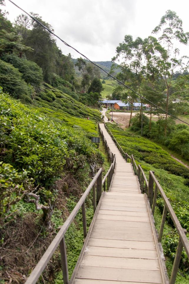 Cầu thang này chụp ảnh cũng rất đẹp | Du lịch Cameron Highland