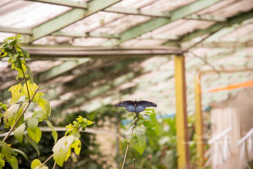 Trang trại Bướm! Nói thật là vào có mấy con bướm nuôi nhốt chứ chả có gì đâu, vào phí xiền