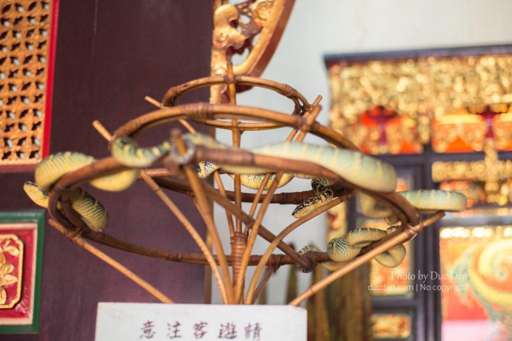 Rắn lục được thờ trong đền