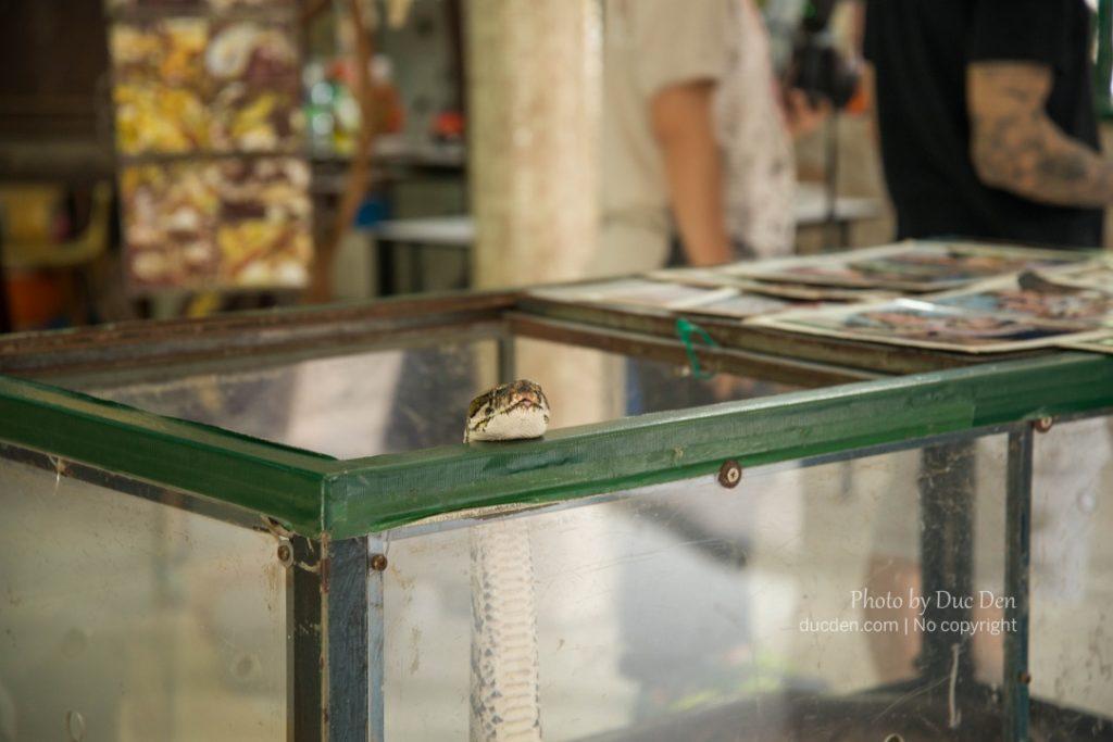 Trăn trong đền rắn Snake Temple | Du lịch Penang