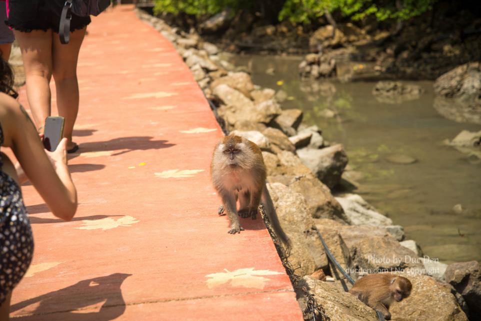 Trên đường đến hồ có rất nhiều khỉ, coi chừng bị nó giựt đồ
