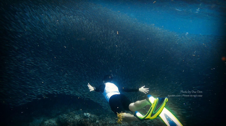 Đến Moalboal để xem và bơi cùng hàng triệu chú cá mòi, rùa biển