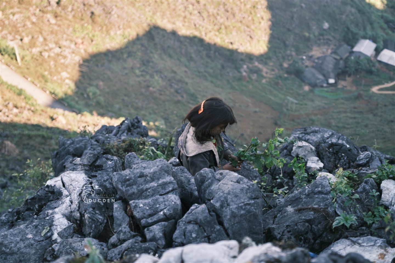Em bé đi cắt cỏ trên cao nguyên đá, dưới là vách núi sâu thẳm đầy nguy hiểm