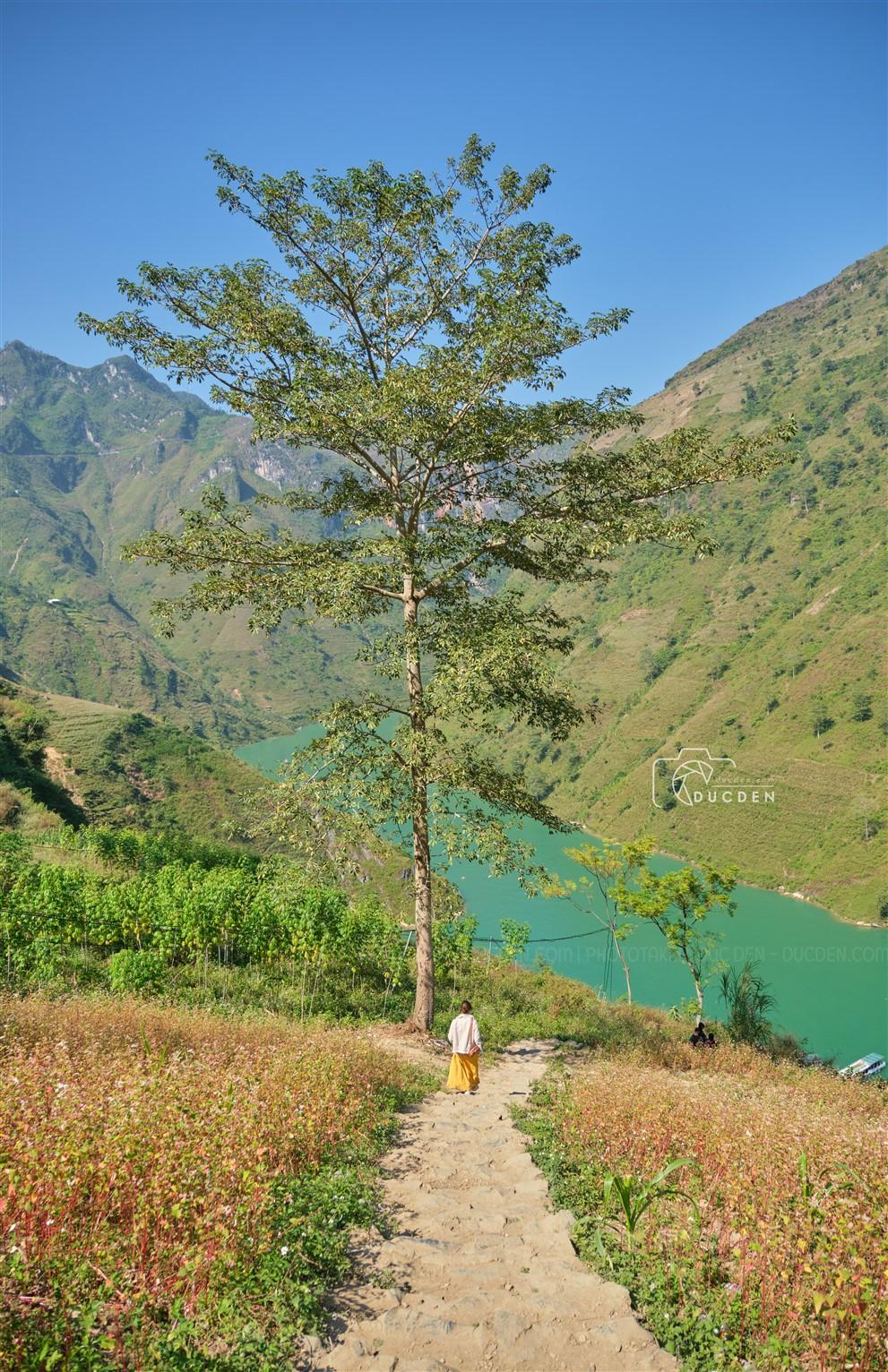 Đường xuống bến thuyền sông Nho Quế vừa xa vừa dốc, lúc leo lên thì có mà bò lên nhé. Được cái cảnh mùa tam giác mạch hoa mọc ven đường cực đẹp